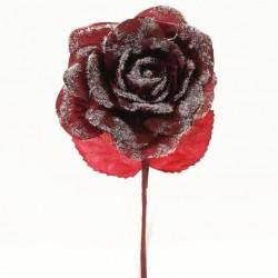 Růže vánoční